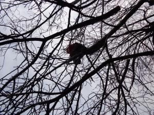 wycinka-drzew-krakow
