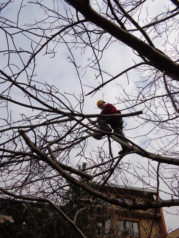 Relacja wideo z prac - wycinka drzew w Krakowie