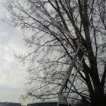 wynajem-zwyzki-przycinka-drzew-krakow